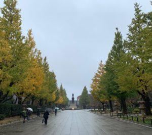境内の色づく銀杏並木