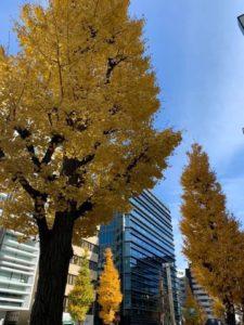 ビル街にそびえる銀杏並木