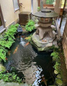 中庭の鯉と石灯籠
