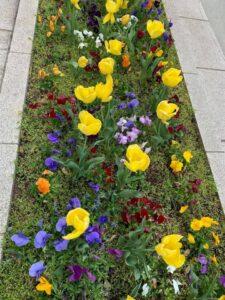 花壇に植えられた色とりどりの花