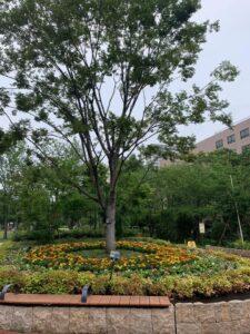 病院構内の植栽