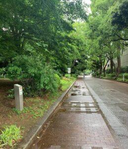雨に濡れた緑の園路